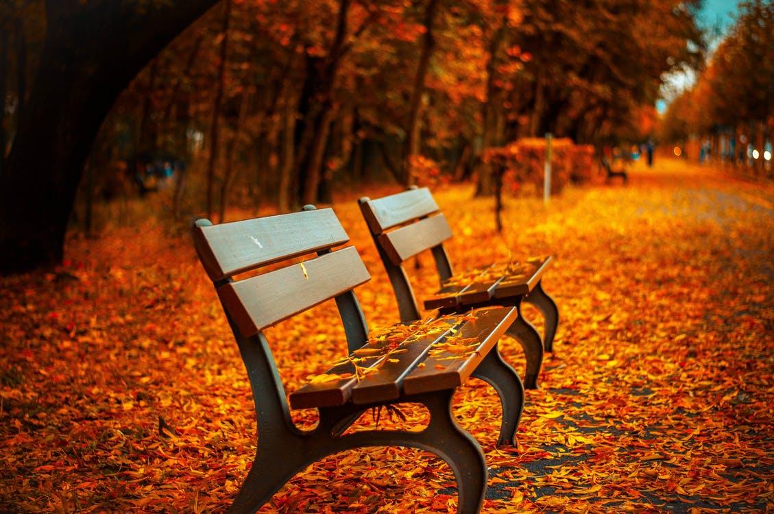 《恋を深める季節》彼と恋を育むための秋おすすめ♪大人デートプラン