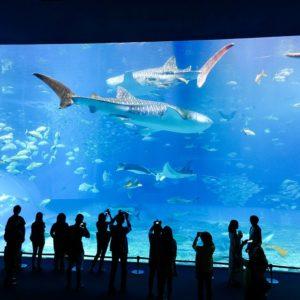 水族館イベント