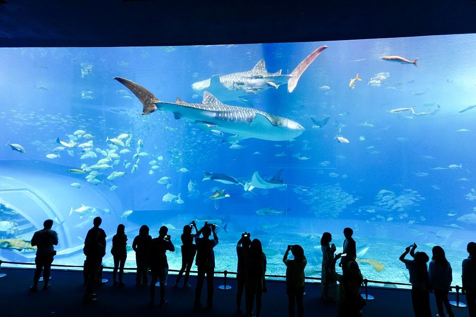 デートに♪リラックスに♪心躍る水族館イベント情報【東京・関東】