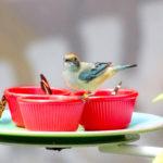 東京の鳥カフェで子鳥と楽しむ|話題の鳥カフェ10選まとめ