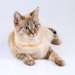 東京の猫カフェで子猫と楽しむ|話題の猫カフェ15選まとめ