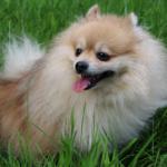 東京の犬カフェで子犬と楽しむ|話題の犬カフェ15選まとめ
