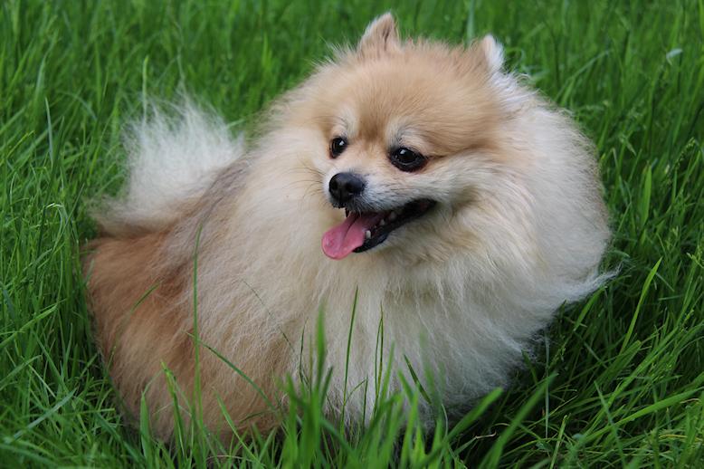 東京の犬カフェで子犬と楽しむ 話題の犬カフェ15選まとめ