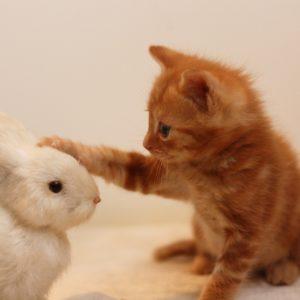猫、ウサギ
