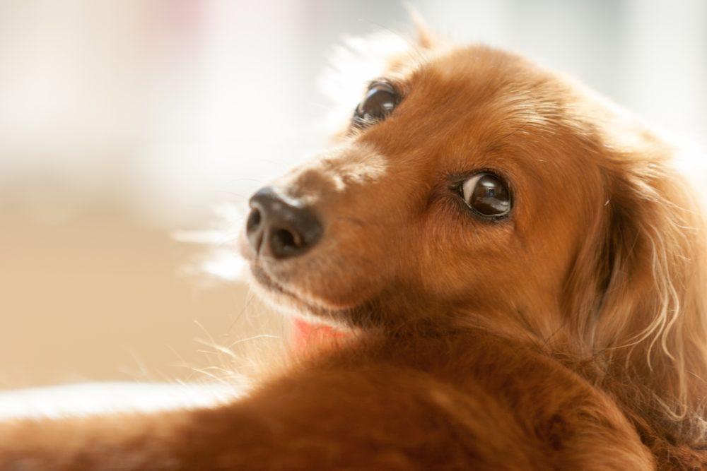 今人気の犬種・猫種は?飼いやすい小型犬&猫BEST3