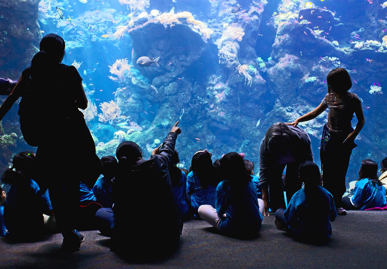 8千匹の金魚が舞う!日本橋『アートアクアリウム2018』を解説!