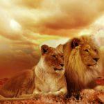 獅子座男性の性格や特徴、恋愛傾向と相性の良い星座は?