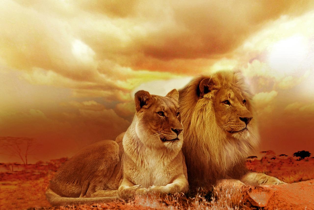 獅子座の男性の恋愛特徴